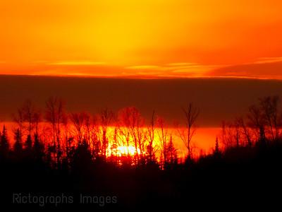 Trees Back Lit, Golden Light,
