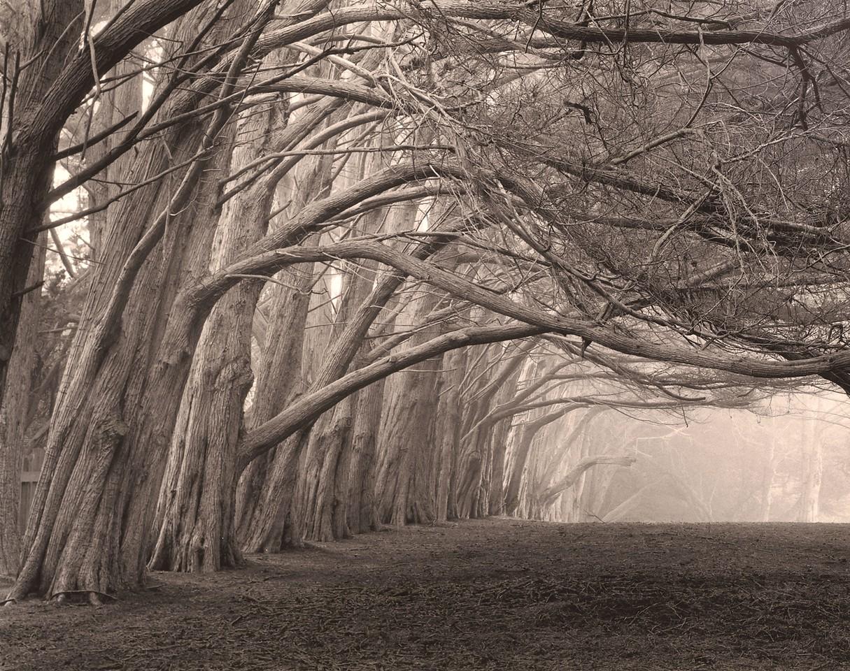 Cypress Grove East, Sea Ranch, California
