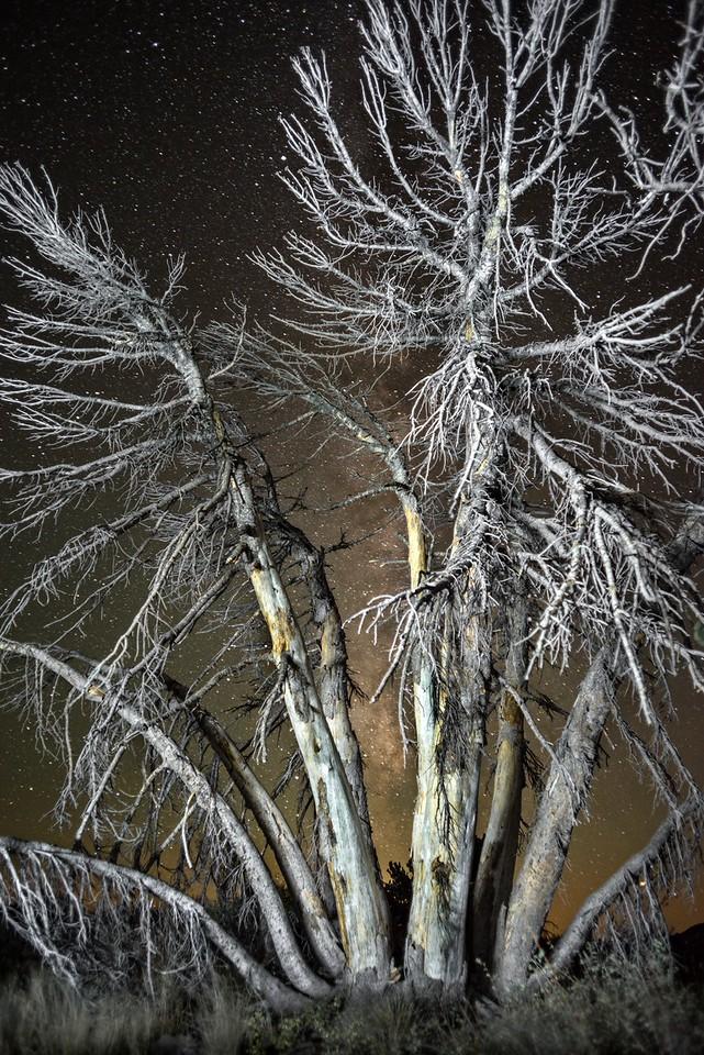 Bare Trees & Milky Way, Mammoth Lakes, California