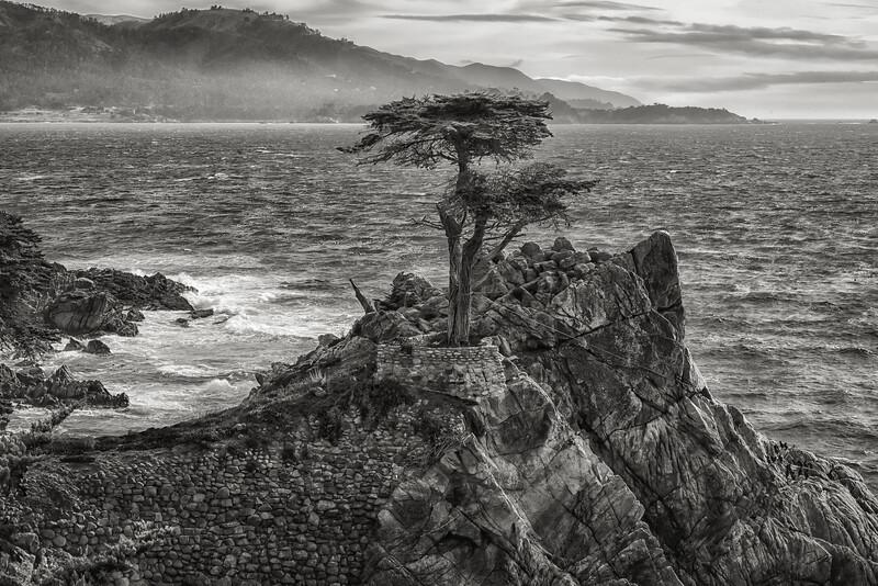 Lone Cypress, Monterey California (B&W Horizontal)