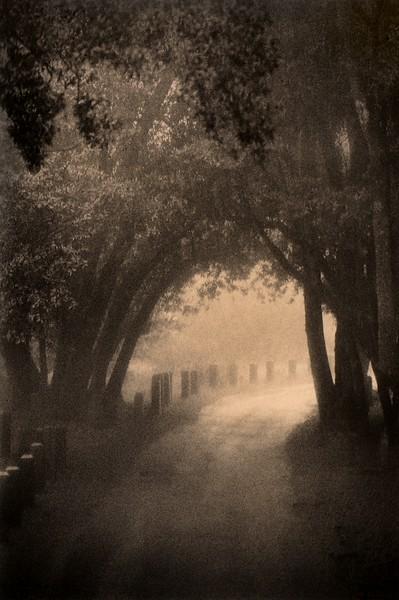 Rainy Path, Mt. Diablo, California