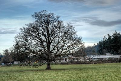 """The Tree of Wisdom"""