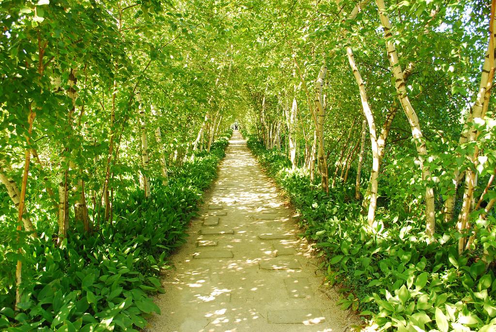 The Path -Summer