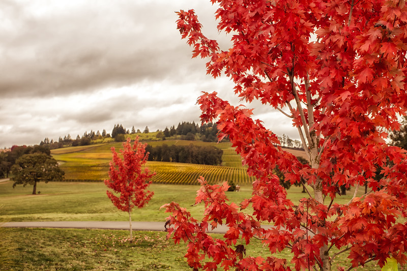 Vineyard red & gold