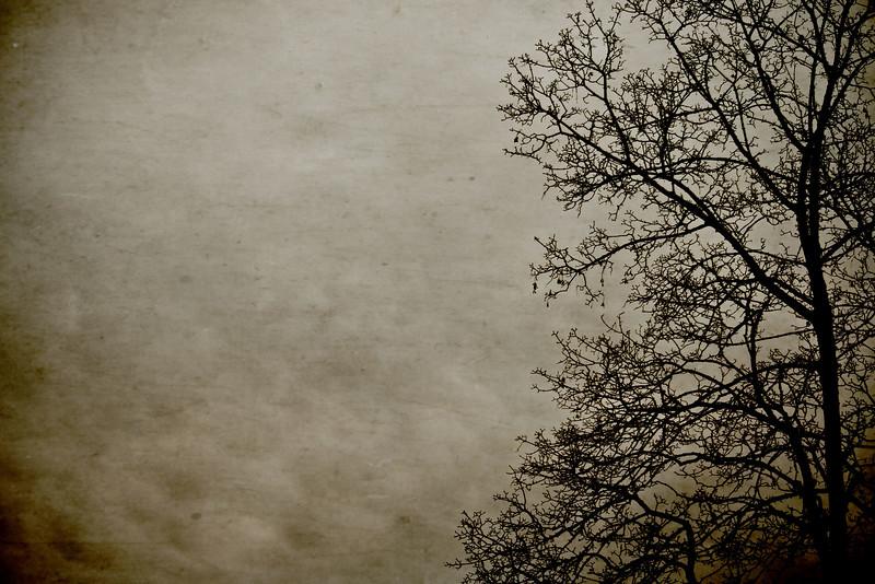 treesilouette