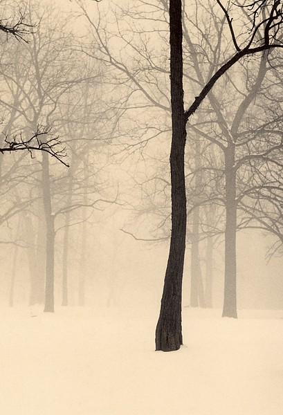 Winter Forest, Palos Park, Illinois