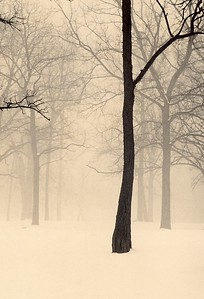 Winter Forest, Palos Park, Illinois