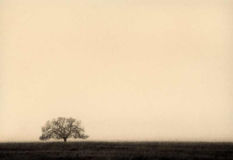 Solitary Oak, I can't remember where, California