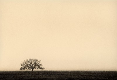 Solitary Oak, I can't remember where, California