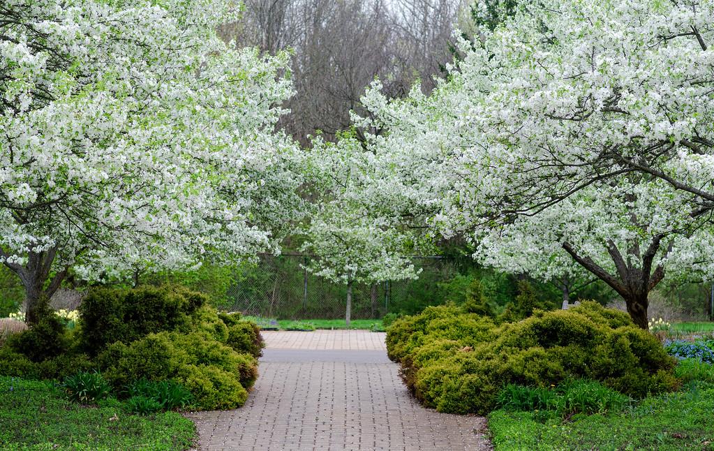 Spring's Glory @ Inniswood