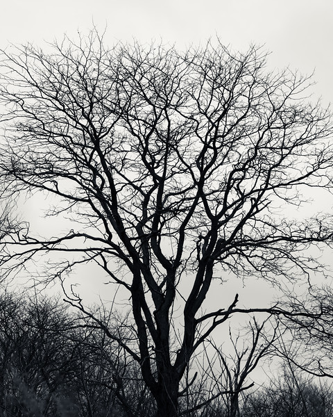 Tree Study 8