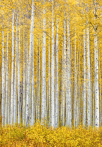 Aspen Paradise, Colorado