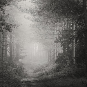 Forest #1