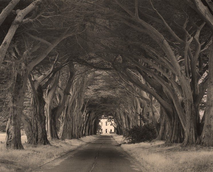 Cypress Lane, Point Reyes, California