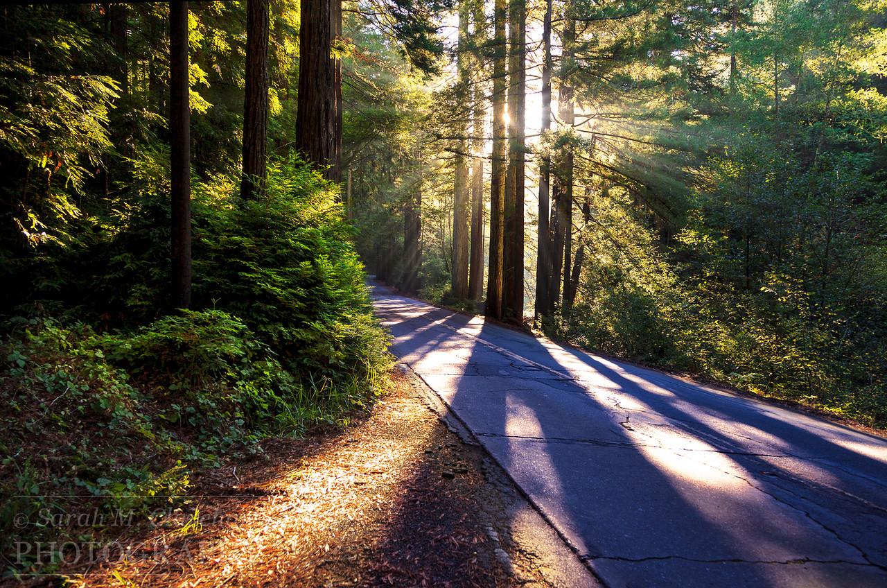 Morning Through the Redwood