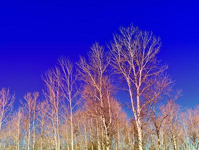 Trees, Sky,