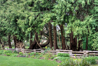 """Beacon Hill Park - Victoria BC Canada Please visit our blog """"Up A Tree"""" for the story behind the photo."""