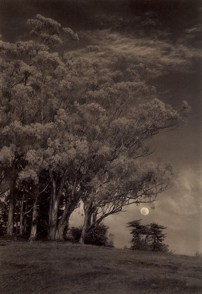 Sleepy Moon, Sea Ranch, California