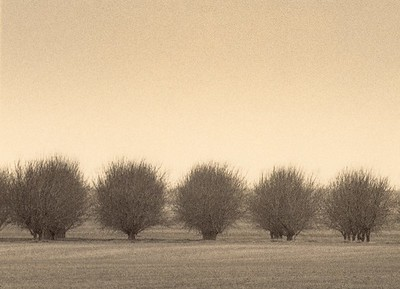 Winter Orchard, Central Valley, California