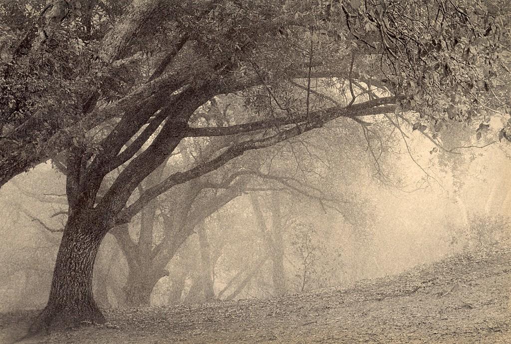 Spring Oak, Sunol, California