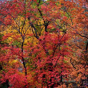McKittrick Colors