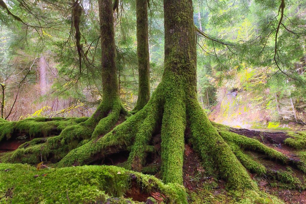 Where the roots run deep.