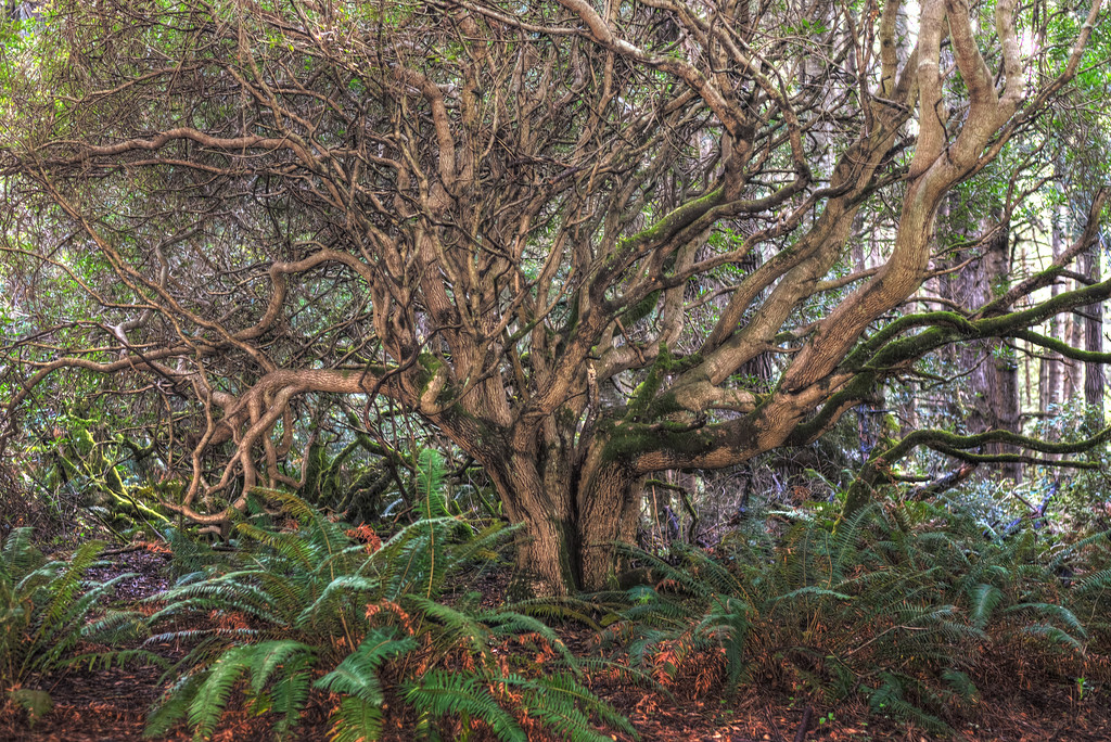 Up Root Tree