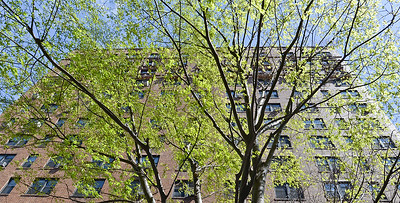 """Meet the 2016 """"Urban Tree of the Year"""", the Musashino Zelkova.  It excels at surviving in tough conditions and it looks great. Musashino is named after a city in Tokyo (which itself is a city but also a prefecture containing other cities)."""