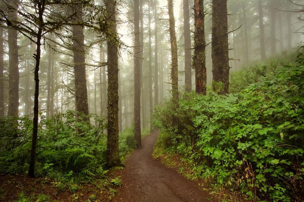 Enchanted Coastal Forest