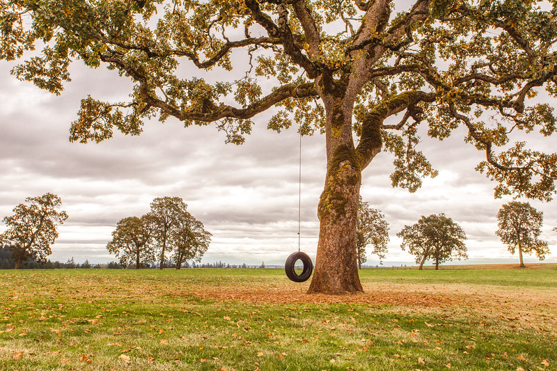 Swinging from the old oak tree.