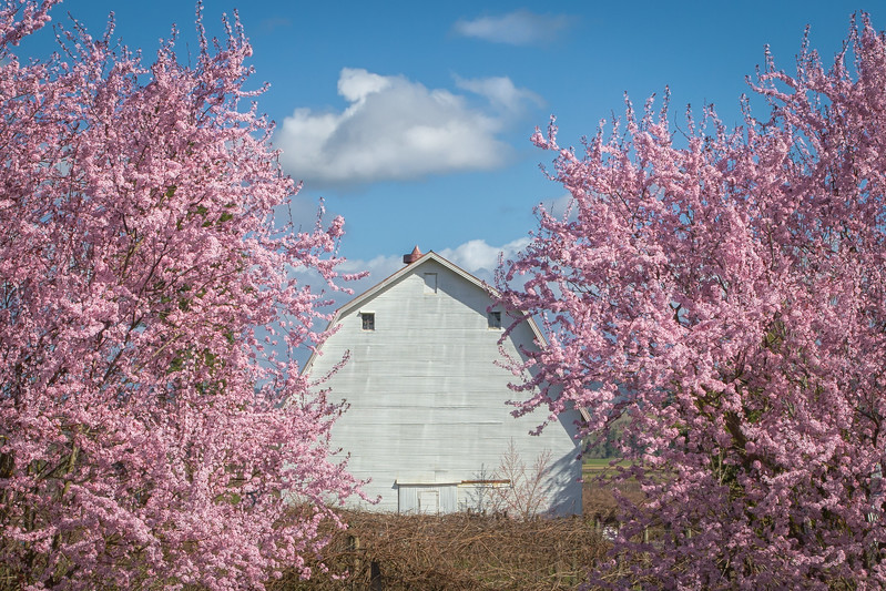Springtime in the country