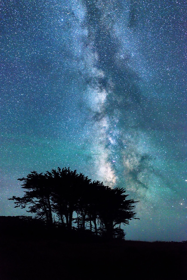 Cypress Stand & Milky Way, Sea Ranch, California
