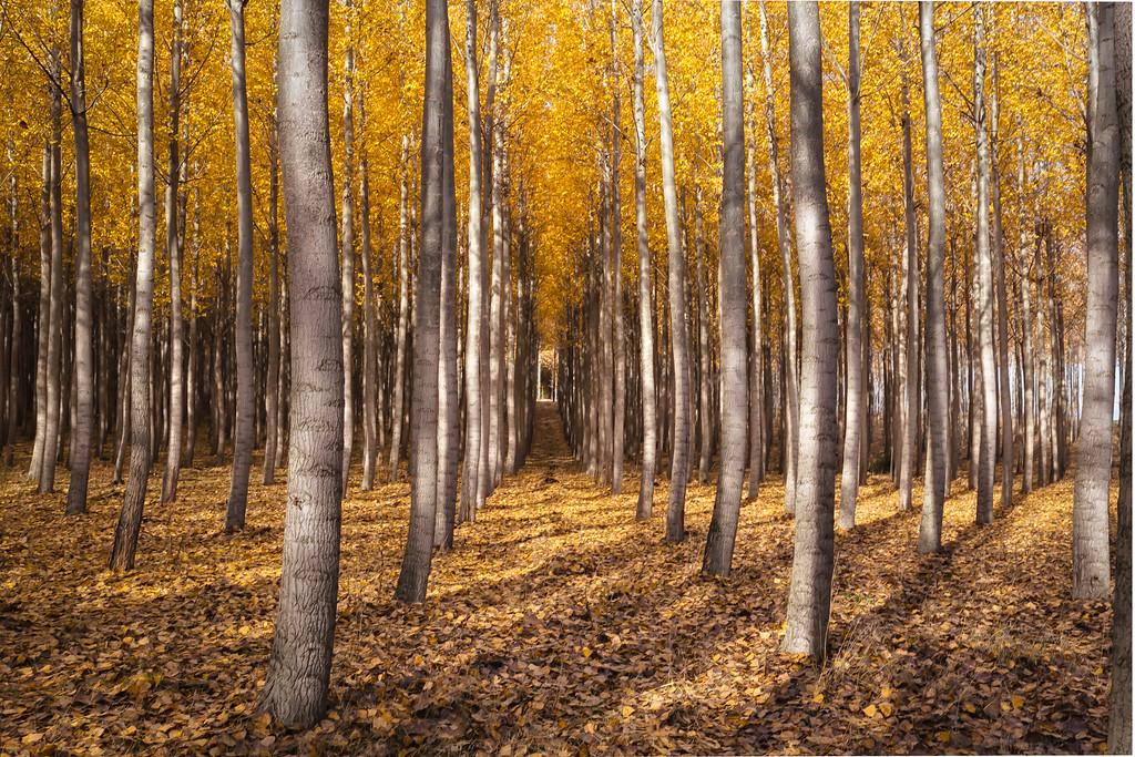 Dappled forest sunlight