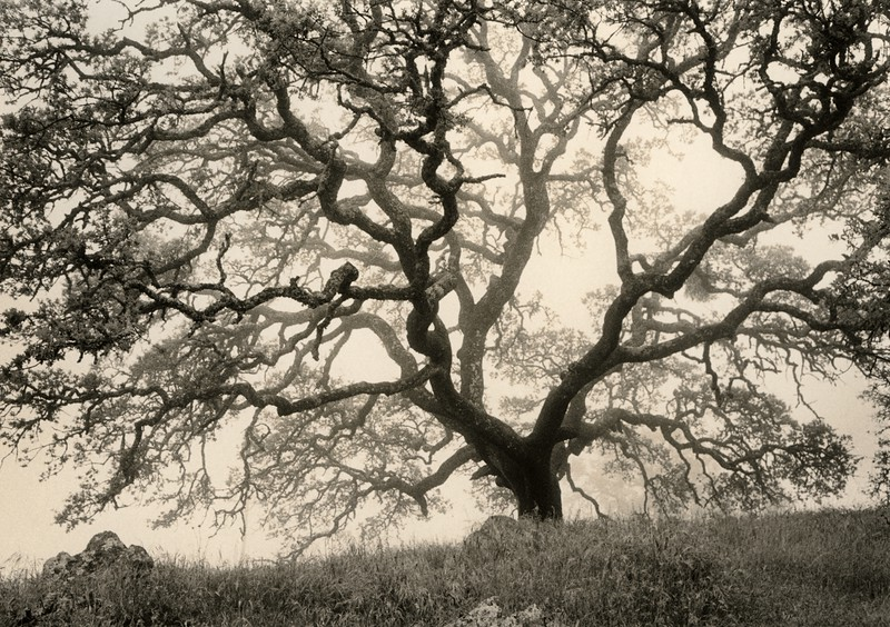 Branching Out, Mt. Diablo, California