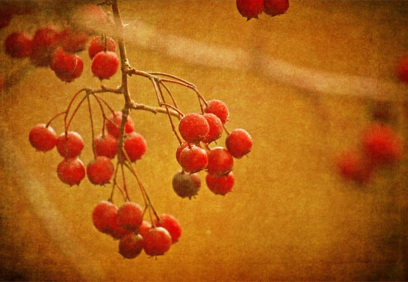 redberries copy