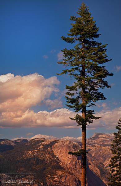 Tall Tree Glacier Point