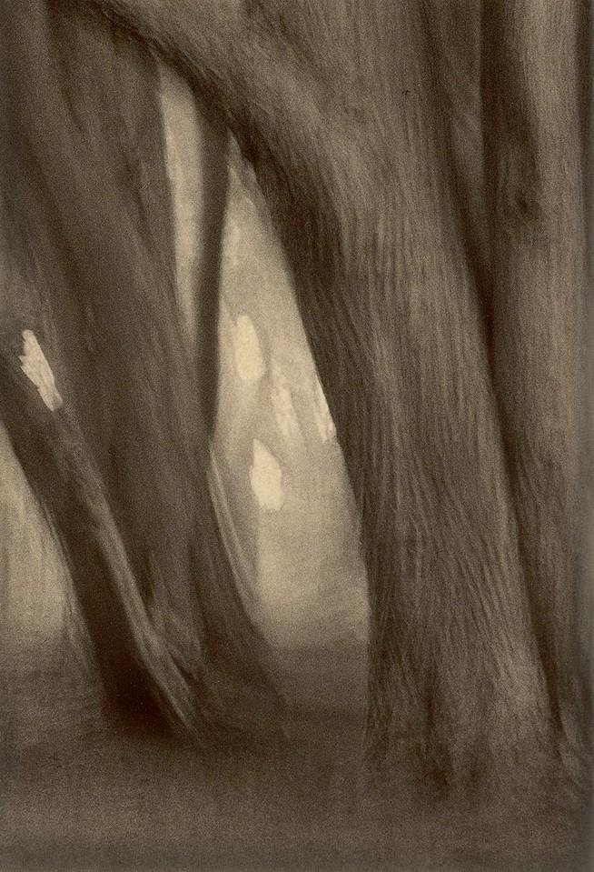 Cypress Dream, Sea Ranch, California