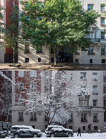 Here are two photos taken from the same spot of the Scholar Tree and the Pear Tree in summer and winter.