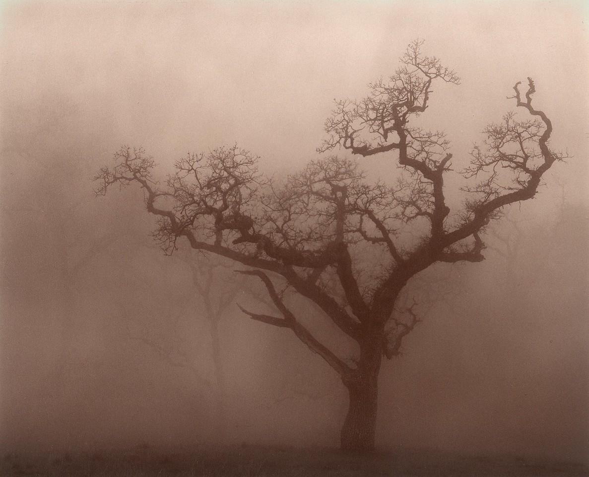 Sonol Mist, Sunol, California