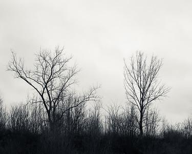 Tree Study 9