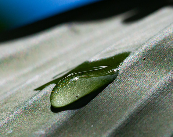 raindrop on banana leaf