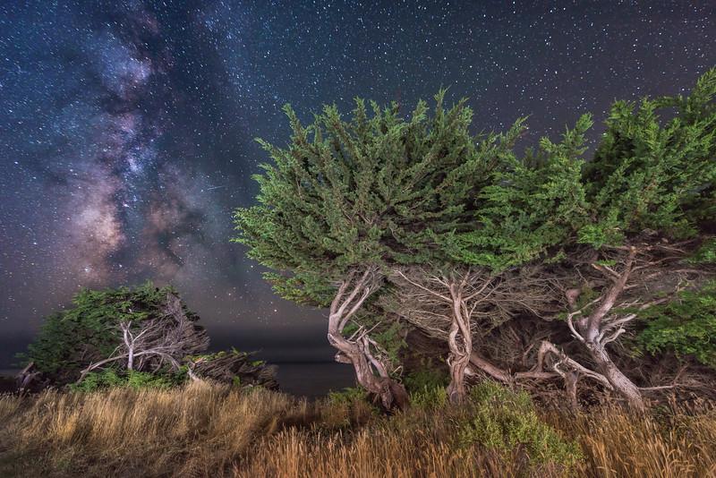 Tiny Sprite, Sea Ranch, California