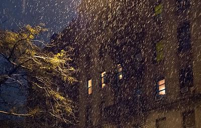 Honeylocust tree in late autumn snowstorm.