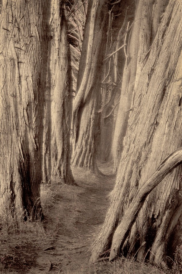 Trail to Smuggler's Cove, Sea Ranch, California