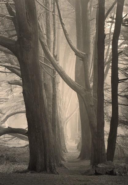 Cypress Mist, Sea Ranch, California