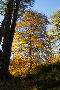Autumn colours at Randolph's Leap, the River Findhorn
