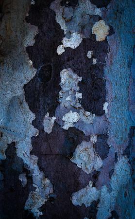 •treesAreTalking.vol I•