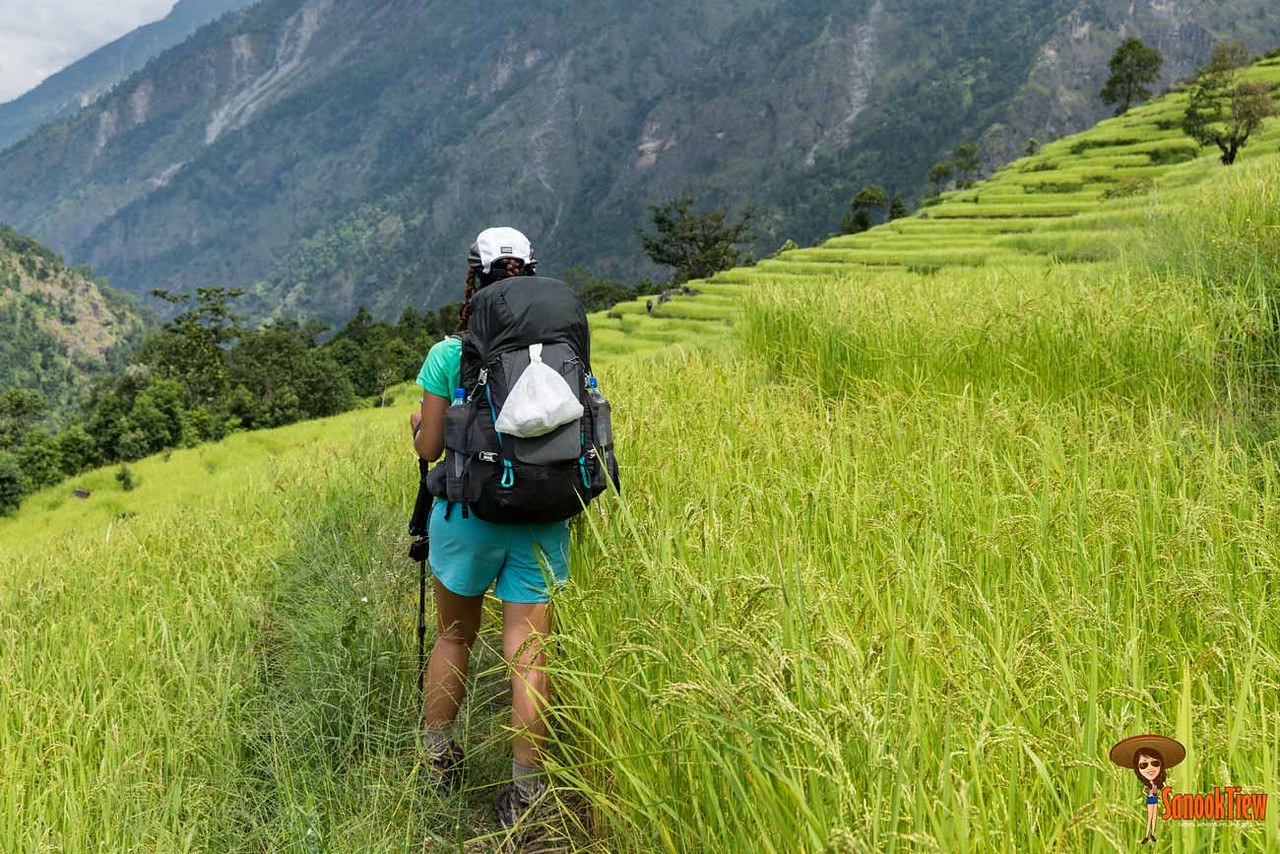 Trekking poles ไม้เท้าเดินป่า