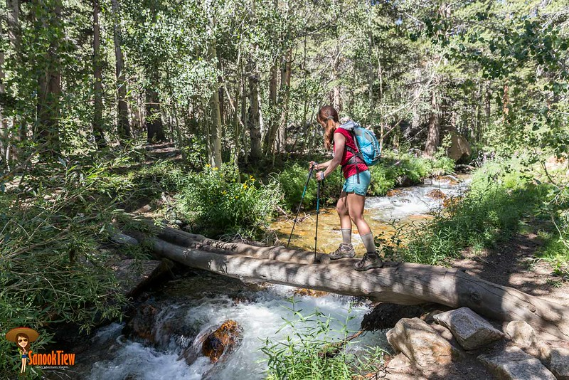 ใช้ ไม้เท้าเดินป่า เที่ยว Inyo National Forest แค้มปิ้งในอเมริกา