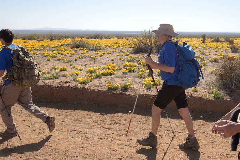 Lonnie Bedwell trekking down the road.  Yellow poppies bloom across the desert landscape.